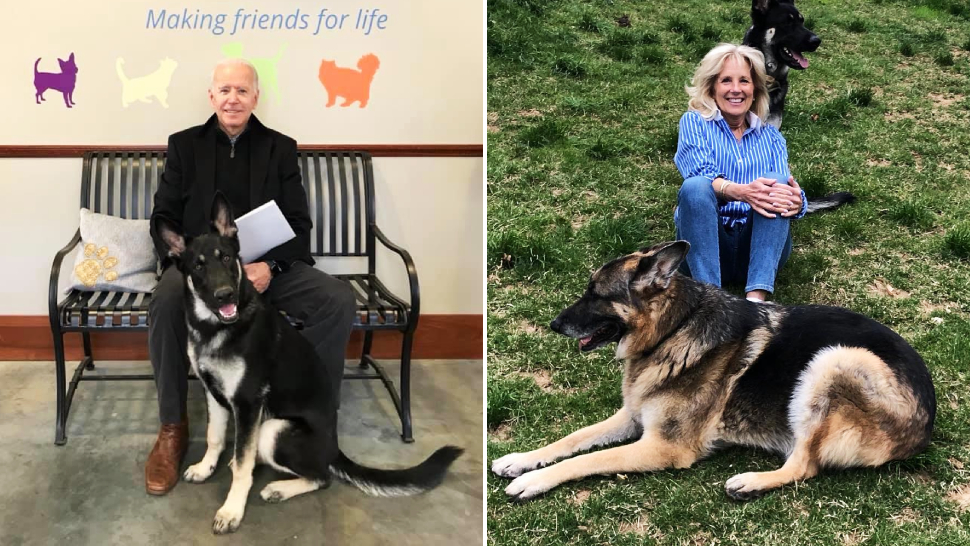 Meet Champ and Major Biden, America's First Dogs