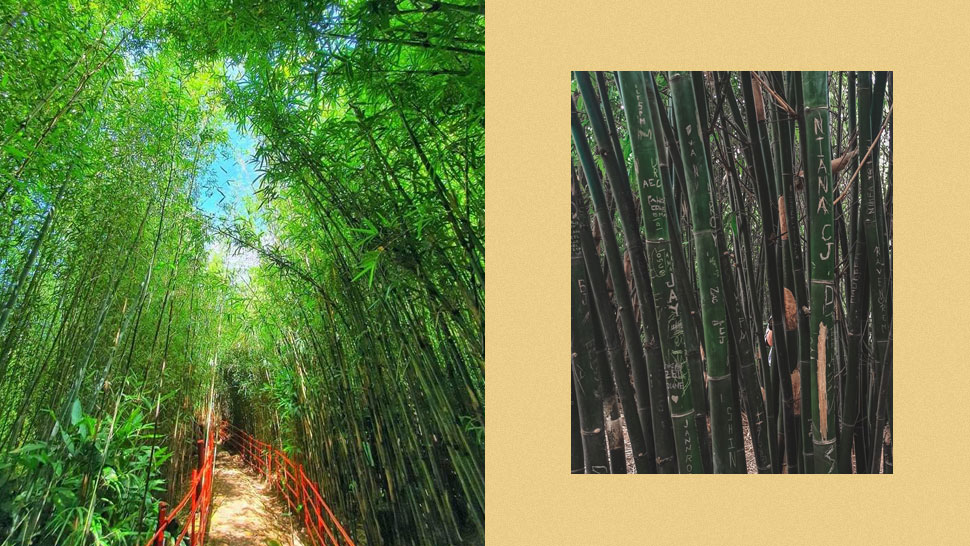 Baguio's Bamboo Eco-Park Is Temporarily Closing Due to Vandalism