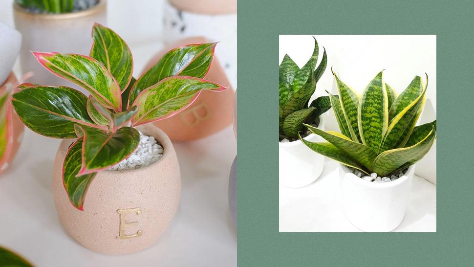 5 Low-maintenance Mini Plants That Will Prettify Your Desk