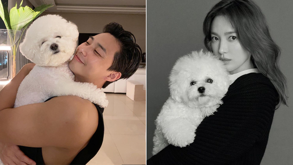 This Is The Exact Adorable Dog Breed That Your Favorite K-drama Stars Love