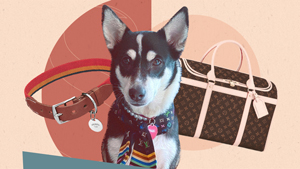 10 Designer Dog Accessories To Spoil Your Furry Friends