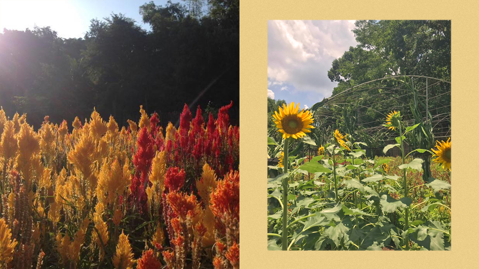 This Instagram-Worthy Flower Farm Is Just an Hour From Manila