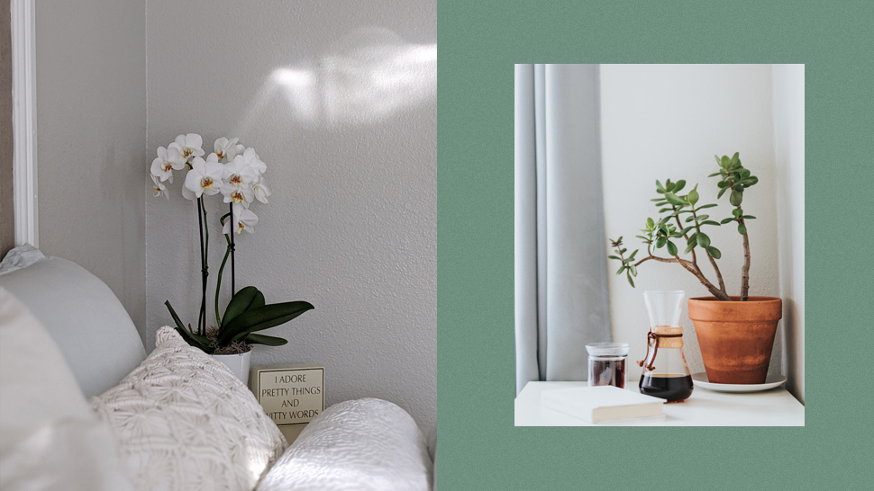 These Aesthetic Plants Will Bring Luck Into Your Home, Says A Feng Shui Master
