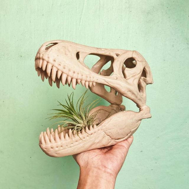Jurassic Pot PH