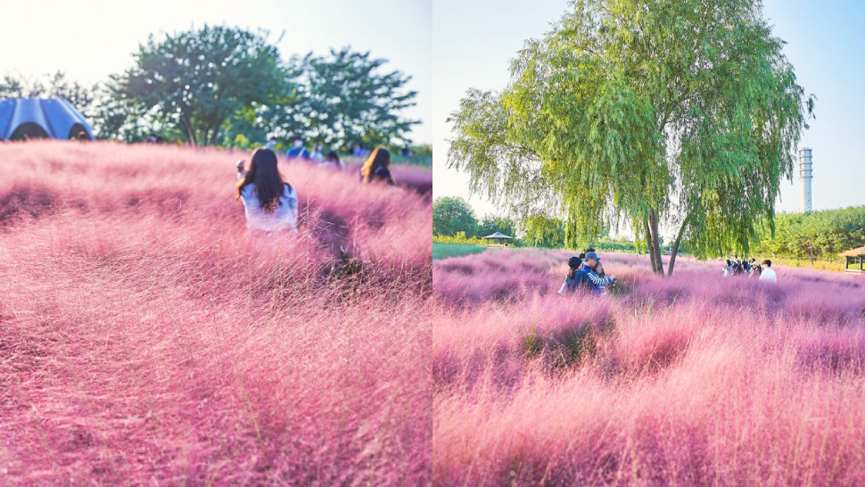 """This Literal """"pink Garden"""" Exists In South Korea And It's So Dreamy"""