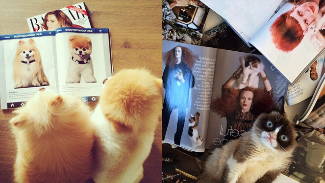World's Most Stylish Pets