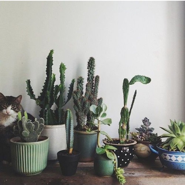how to take care of a cactus indoors