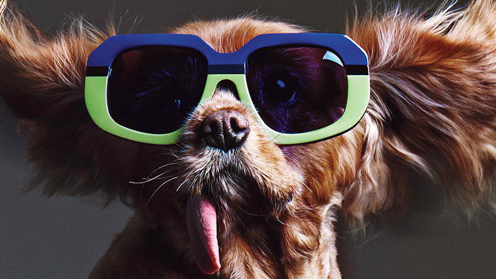 What Your Sunnies Say About You