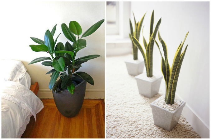Home Interior Plants | 3 House Plants That Can Purify The Air At Home Rl