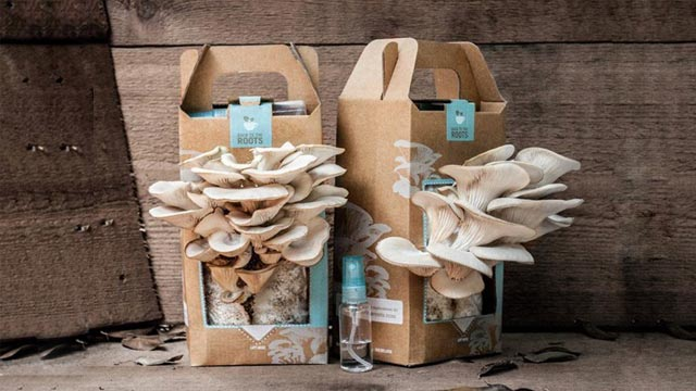 Grow Your Own Mushrooms at Home