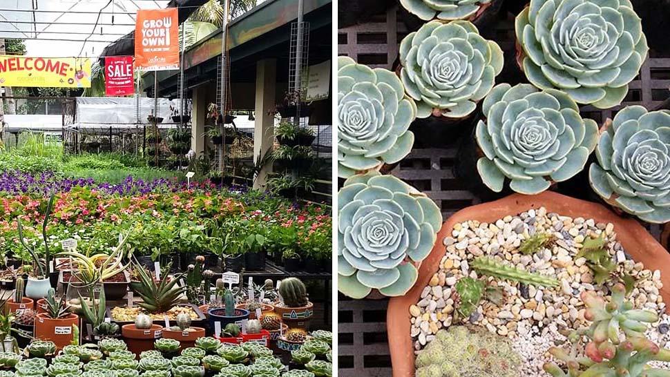 LOOK A Secret Garden Center In Quezon City