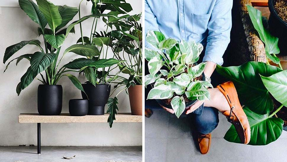 Christmas Gift Ideas For Plant Lovers and Green Thumbs | RL