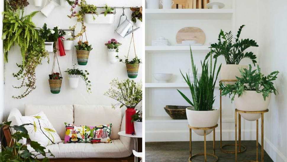 5 Unique Ways To Display Indoor Plants