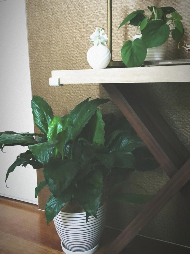 tonigonzaga-home-plants
