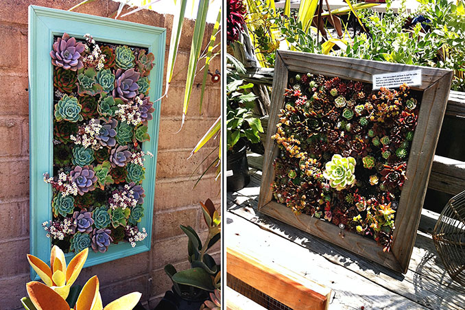 DIY: Framed Succulent Wall Decor