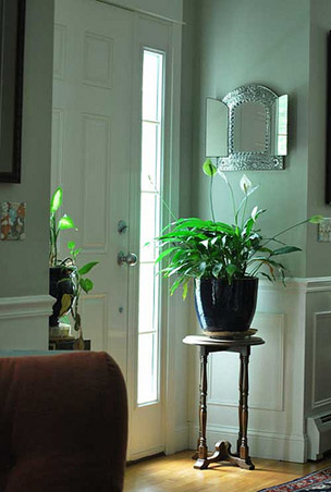 5 Indoor Plants For Your Home Rl