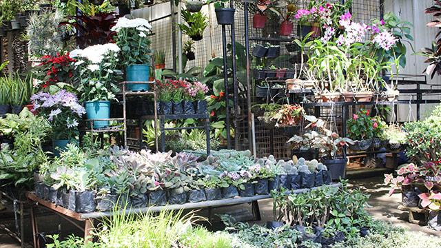 7 Must Visit Garden Shops In White Plains Quezon City