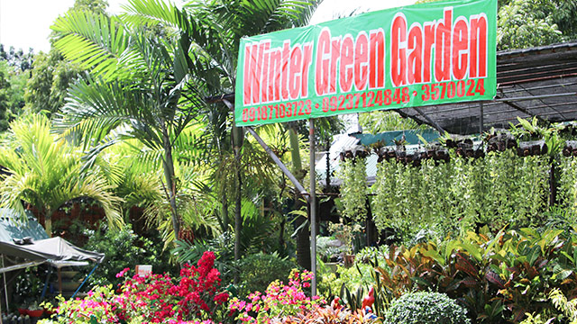 7 Must-Visit Garden Shops in White Plains, Quezon City | RL