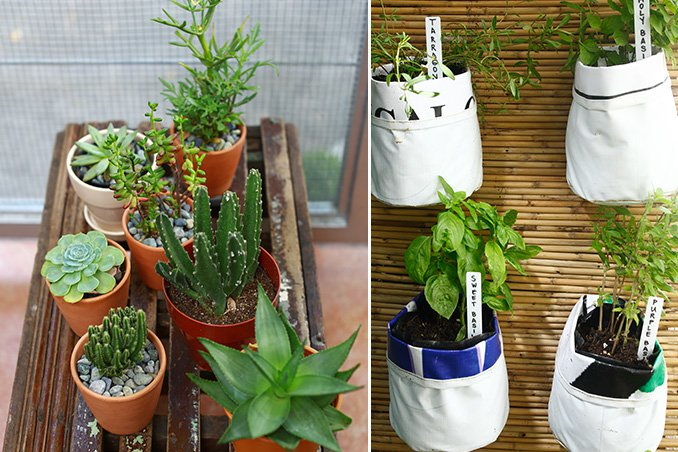 5 Indoor Plants for Your Home | RL