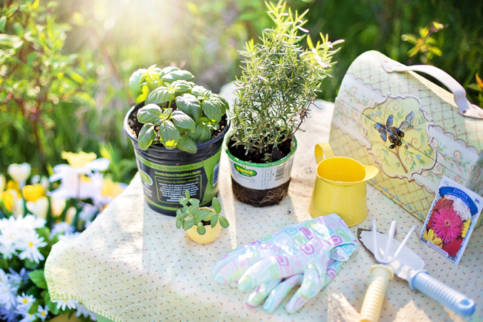 4 Plants For Your Herb Garden