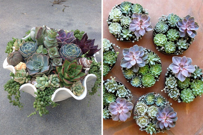 Like Most Plants Succulents Require Water Sunlight And Air To Thrive Grow It S Important Note That These Mini Wonders Are Tricky Little Creatures
