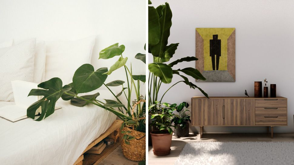 10 Houseplants Perfect For Lazy People