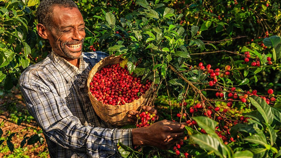 6 Surprising Ways the Coffee Industry Is Changing People's Lives