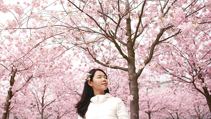 See cherry blossoms around Asia with Klook's Blossom Season Sale
