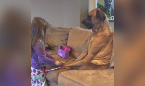 This Made Our Day: Family Dog Gets a Checkup from the Most Adorable Doctor Around