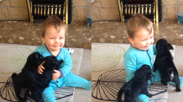 This Made Our Day: Baby Giggles as He Gets Smothered by Puppies