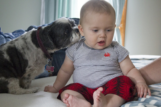 Study Has Found that Kids Who Grew Up With Dogs Have Lower Risks of Asthma