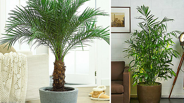5 More Houseplants That Can Purify The Air At Home