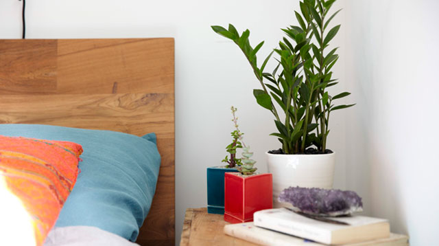 3 Household Plants That Can Help You Sleep Better