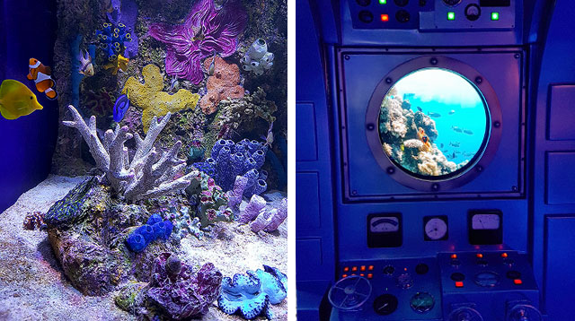 Let Your Child Learn About Marine Habitat Without the Long Drive