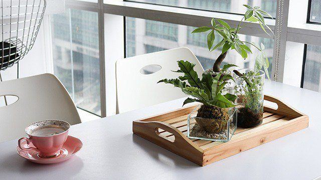 3 Areas At Home Where You Can Set Up An Indoor Garden
