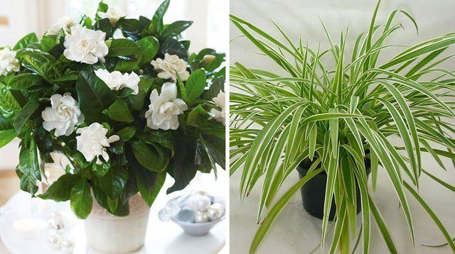 6 More Household Plants To Help You Sleep Better