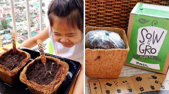 You Don't Need a Garden Space With This Seed Kit!