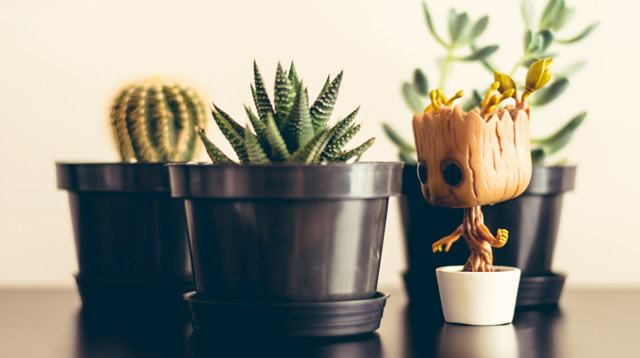 Quick Guide for Moms: 5 Ways to Keep Your Houseplants from Dying