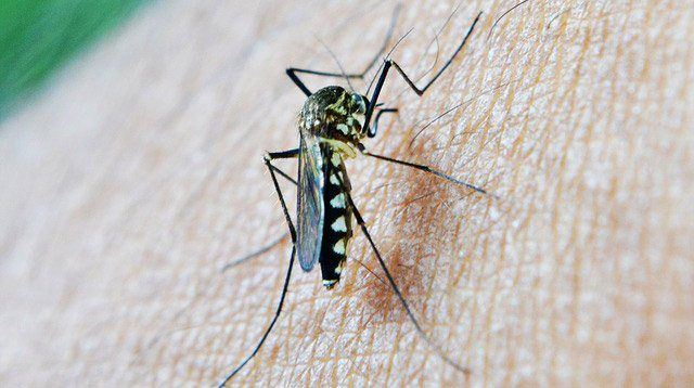 UPDATE: 133 Cases of Japanese Encephalitis in the Country