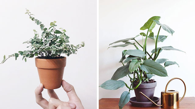 6 Plants That Can Grow Even In Dark Corners