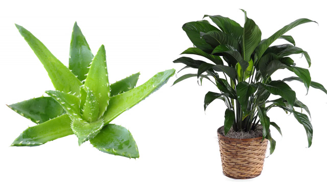 These Indoor Plants Can Keep Your Home Cool