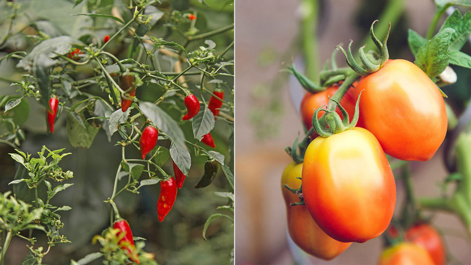 6 Vegetables That Are Easy To Grow At Home
