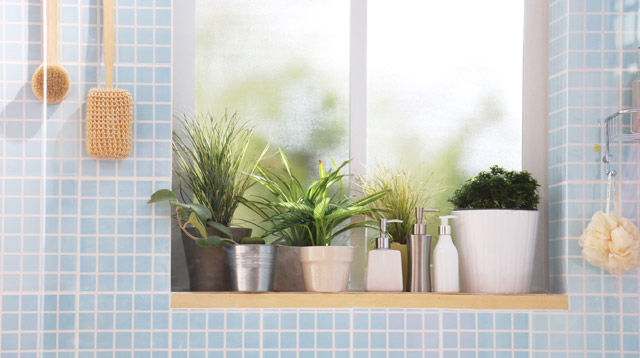 Instant Makeover! 8 Plants That Can Survive in the Bathroom