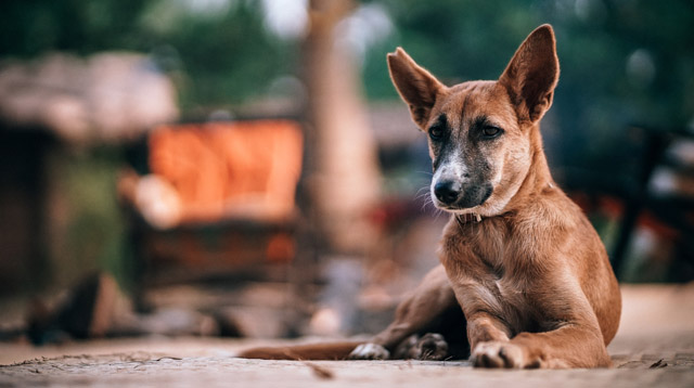 A Dog is More Likely to Bite in the Summer. What to Do If a Dog Bites Your Child