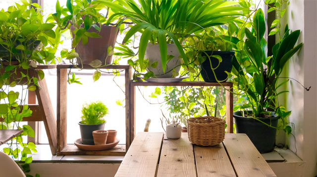 3 Things to Consider Before Starting an Indoor Garden at Home
