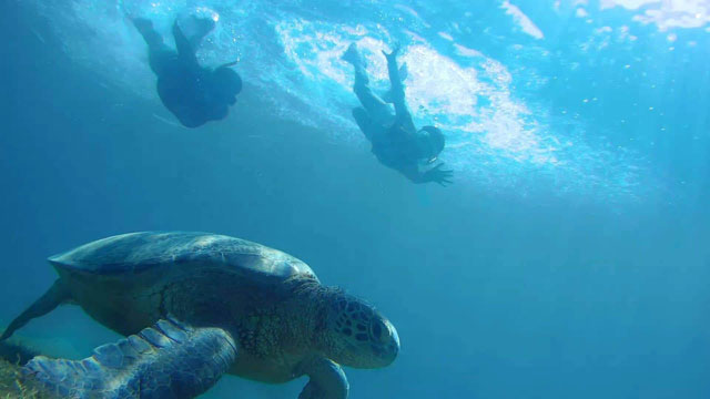 sea turtles Pandan Island