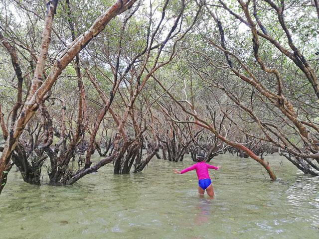 Suyac Island Mangrove Eco Park