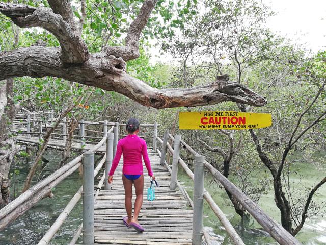 Suyac Island Mangrove Eco Park Negros