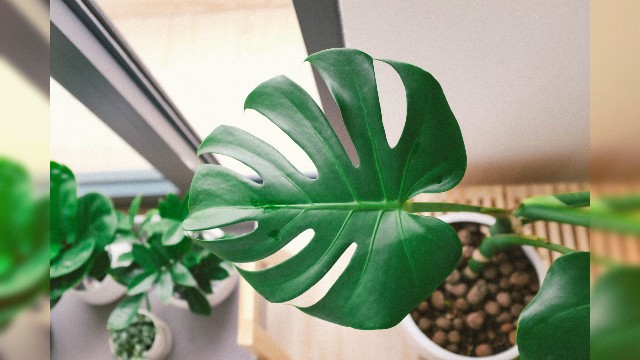 10 Low Maintenance Houseplants You Or Your Friend Cannot Kill