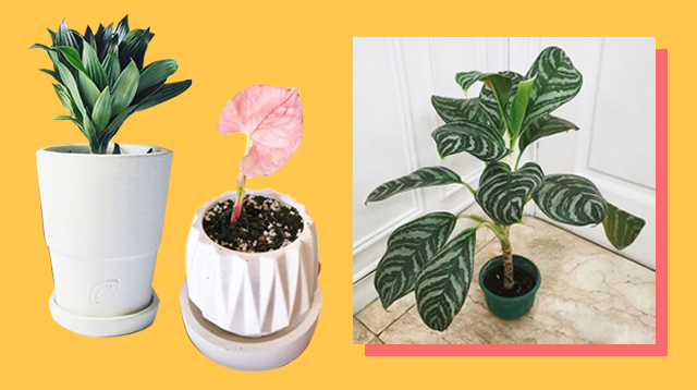 Time To Grow Your Indoor Garden! 12 Online Stores That Deliver